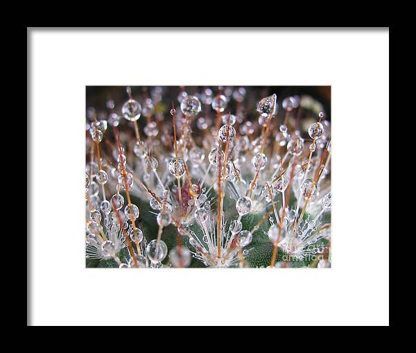 Flower Framed Print featuring the photograph Mystical Photography by Tina Marie