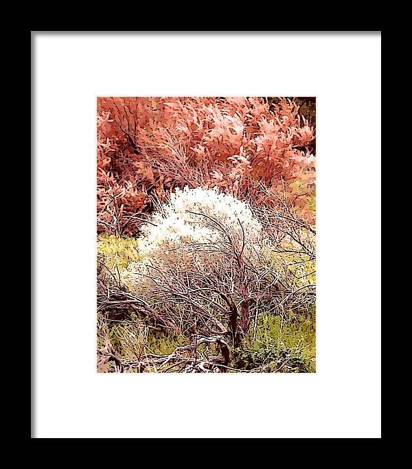 Bushes Framed Print featuring the photograph Mystical Bushes by Edward Joseph Anthony