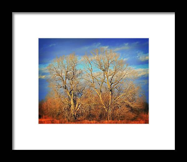 Wall Art Framed Print featuring the photograph Naked Branches by Marty Koch