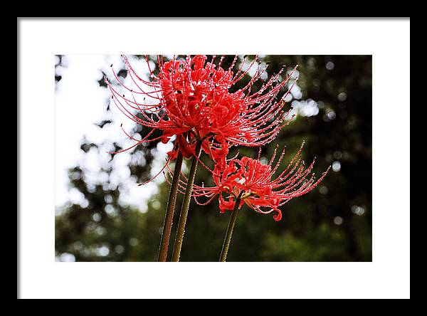 Flowers Framed Print featuring the photograph Naked Ladies by Leon Hollins III