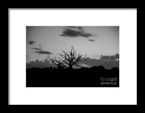 Naked Tree Framed Print featuring the photograph Naked Tree by Mina Isaac