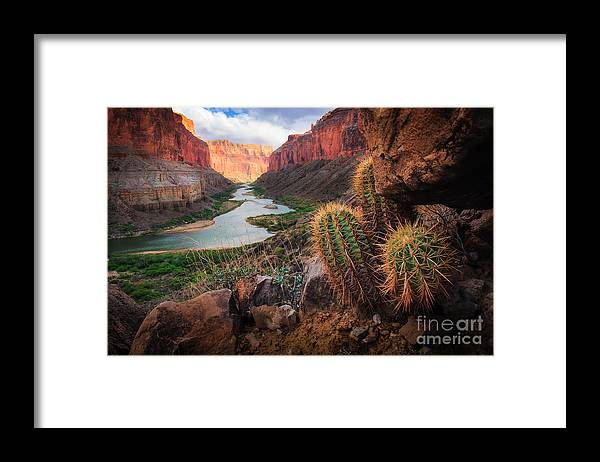 America Framed Print featuring the photograph Nankoweap Cactus by Inge Johnsson