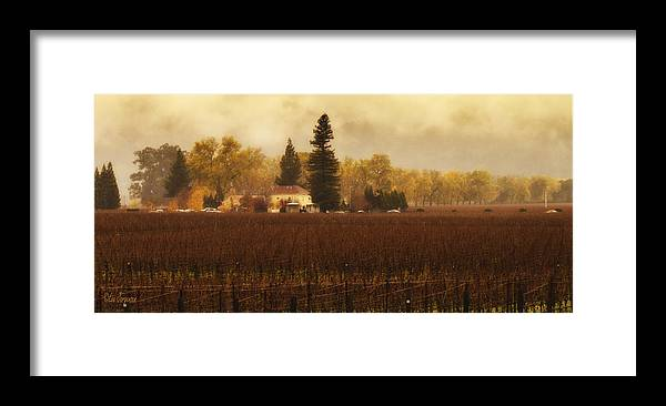 Wine Framed Print featuring the photograph Napa In The Fall by Lee Jorgensen