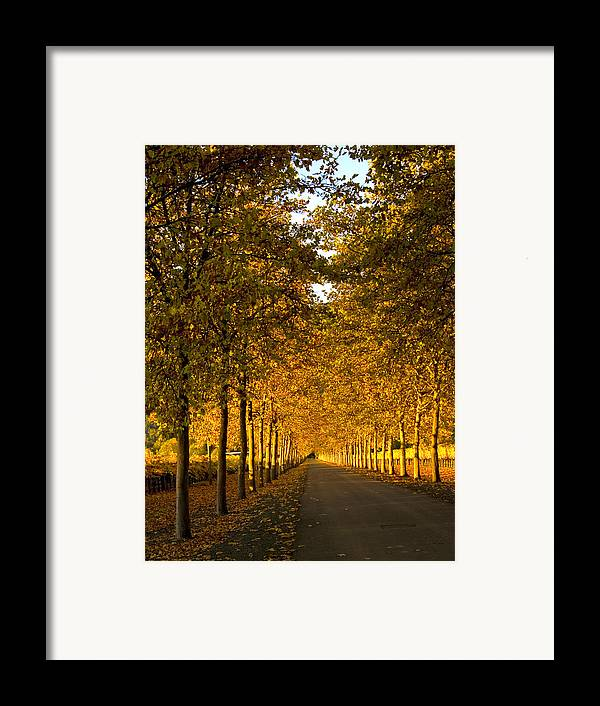 Napa Valley Framed Print featuring the photograph Napa Valley Fall by Bill Gallagher