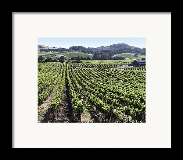 Napa Framed Print featuring the photograph Napa Valley Vineyard by Dee Savage