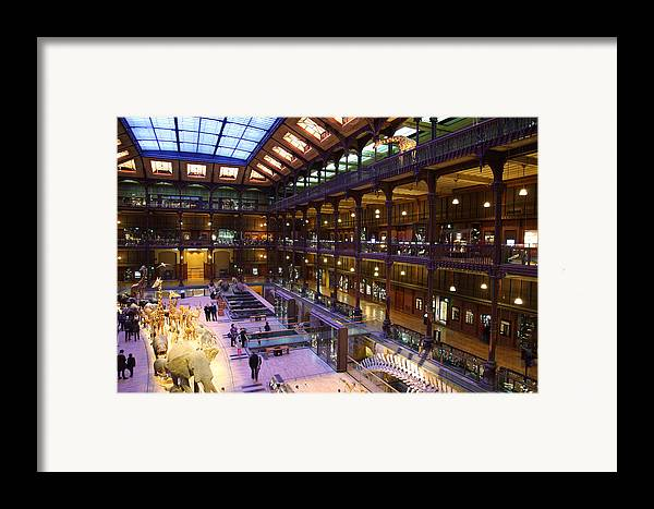 Paris Framed Print featuring the photograph National Museum Of Natural History - Paris France - 011370 by DC Photographer