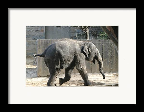 National Framed Print featuring the photograph National Zoo - Elephant - 12126 by DC Photographer