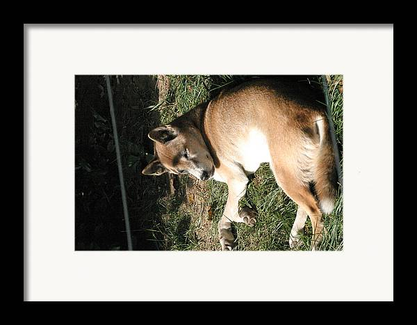 National Framed Print featuring the photograph National Zoo - Mammal - 12124 by DC Photographer