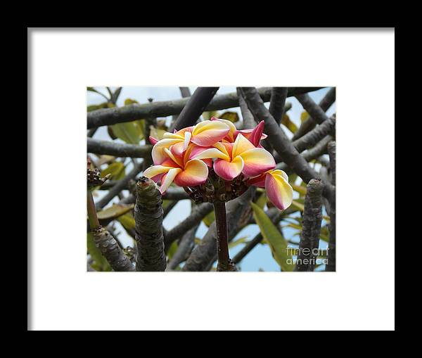 Hawaii Framed Print featuring the photograph Natural Bouquet by Mindy Sue Werth