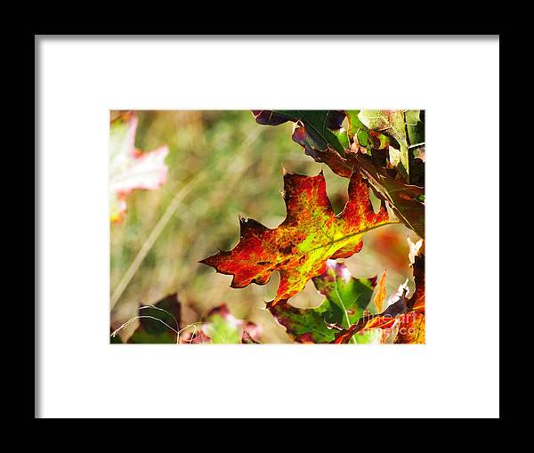 Leaf Framed Print featuring the photograph Natural Color by Rrrose Pix