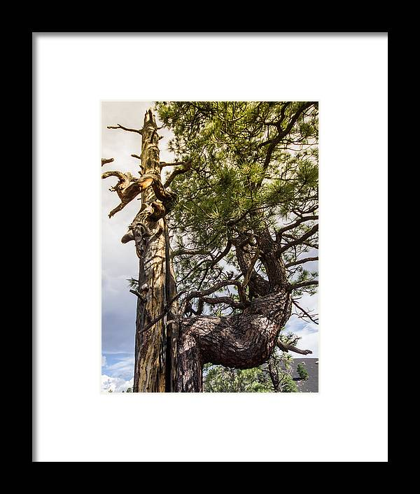 Resurrection Framed Print featuring the photograph Natural Resurection by Andreas Hohl