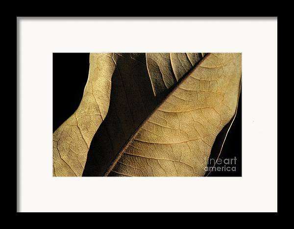 Nature Framed Print featuring the photograph Natural Seduction by Dan Holm