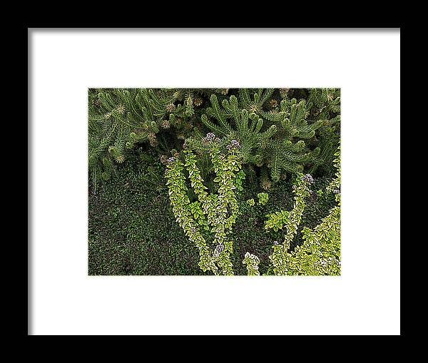 Plants Framed Print featuring the photograph Natural Textures by Ben Freeman