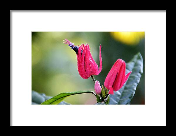Floral Framed Print featuring the photograph Natural Wonder 2 by David Earl Johnson