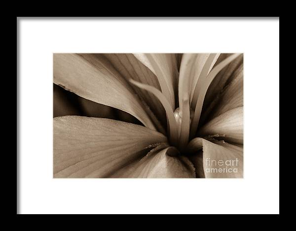 Framed Print featuring the photograph Nature Beauty by Nel Saints