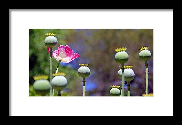 Flowers Framed Print featuring the photograph Nature by Jim McCullaugh