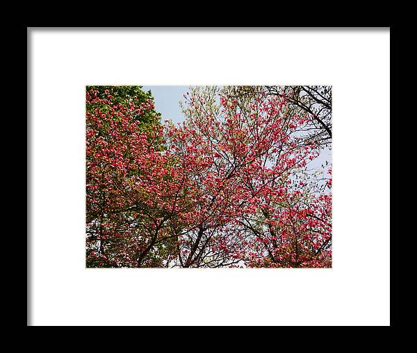 Trees Framed Print featuring the photograph Nature by Karl Rose