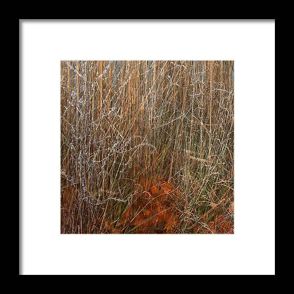 Nature Print Framed Print featuring the photograph Nature Once Removed by Anders Hingel