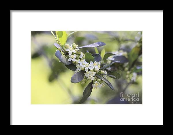 Flower Framed Print featuring the photograph Nature Path Flower by Deborah Benoit