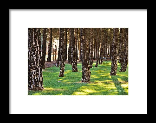 Forest Framed Print featuring the photograph Nature Walk by Herman Cloete