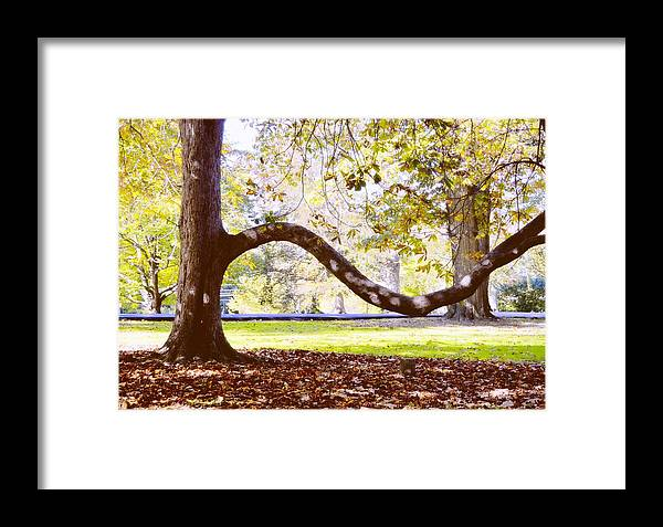 Autumn Framed Print featuring the photograph Nature's Bench by JAMART Photography