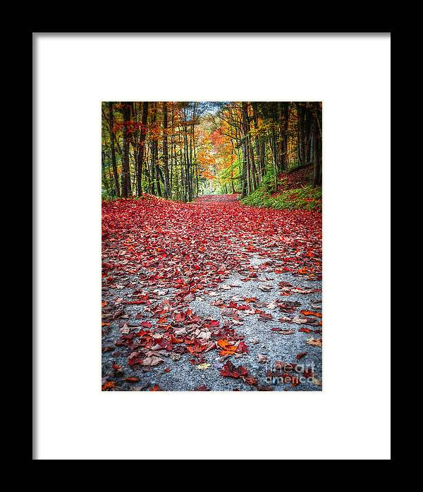 Fall Framed Print featuring the photograph Nature's Red Carpet by Edward Fielding
