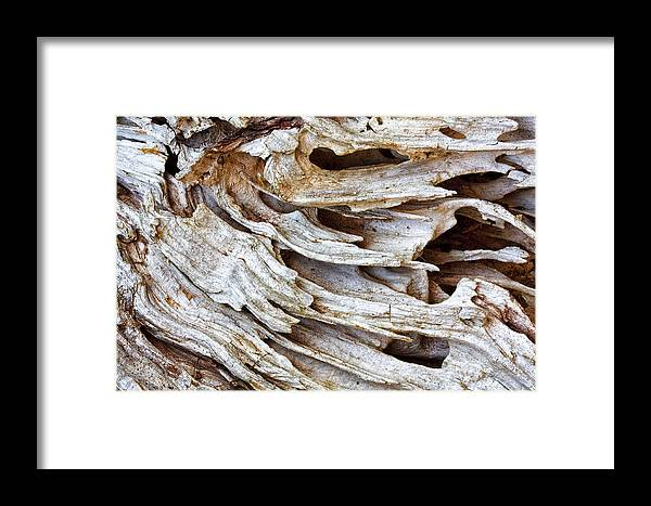 Driftwood Framed Print featuring the photograph Nature's Sculpture-3 by Shirley Mitchell