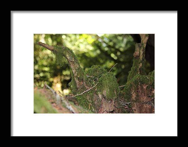 Ducks Framed Print featuring the photograph Natures Wooden Duck by Richard Katz