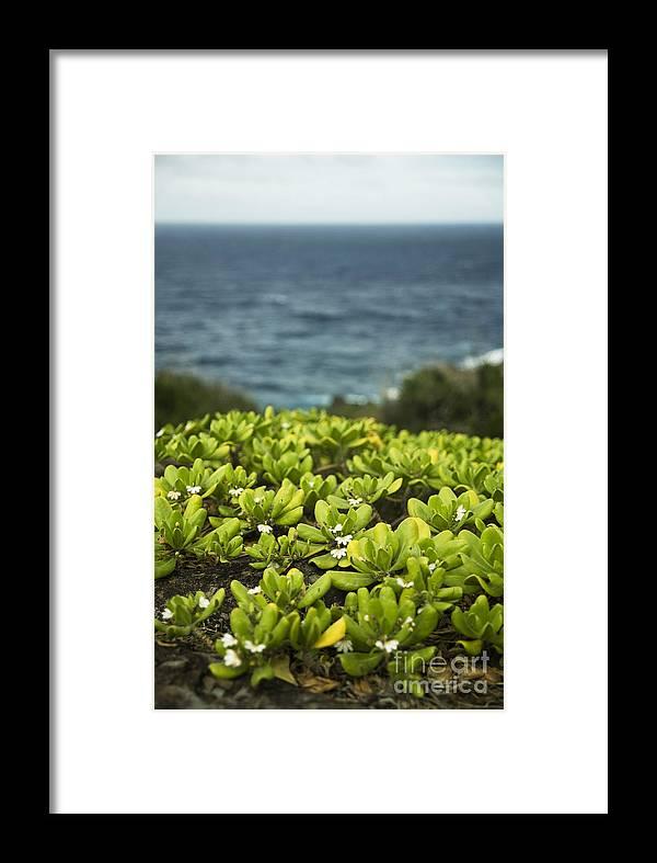 Hawaii Framed Print featuring the photograph Naupaka Plant by Charmian Vistaunet