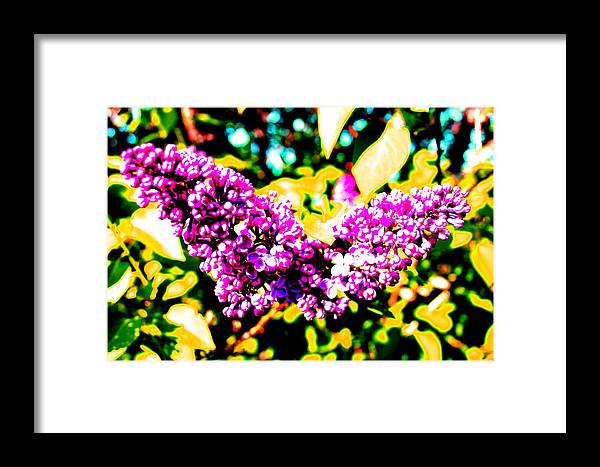 Lilac Framed Print featuring the photograph Neon Lilac by Mavis Reid Nugent