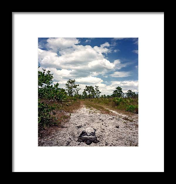 Animal Photography Framed Print featuring the photograph Nesting Soft Shell And Scrub. by Chris Kusik
