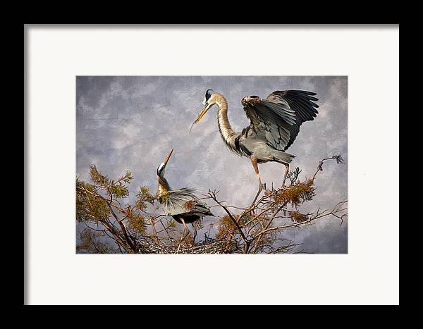 Bird Framed Print featuring the photograph Nesting Time by Debra and Dave Vanderlaan
