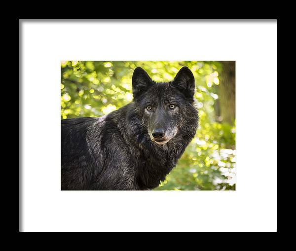 Animals Framed Print featuring the photograph NETAR in Spring by Jay Huron