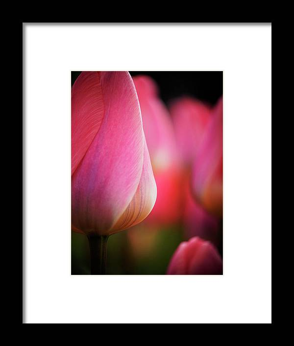 Benelux Framed Print featuring the photograph Netherlands, Macro Image Of Colorful by Terry Eggers