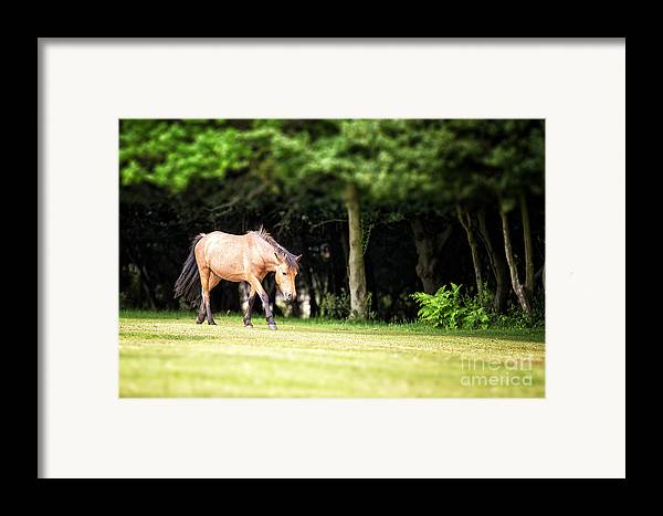 Forest Framed Print featuring the photograph New Forest Pony by Jane Rix