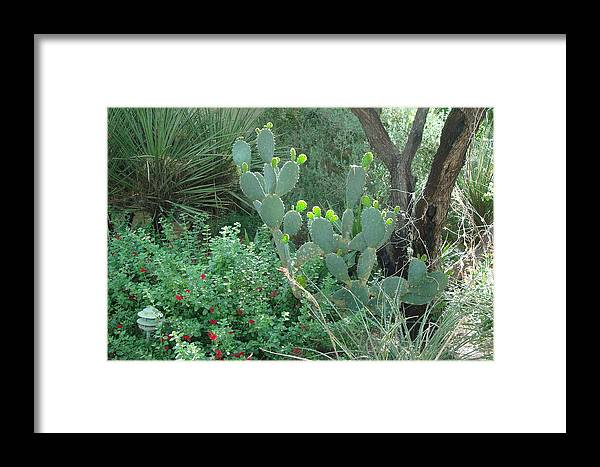 Garden Framed Print featuring the photograph New Growth by Susan Woodward