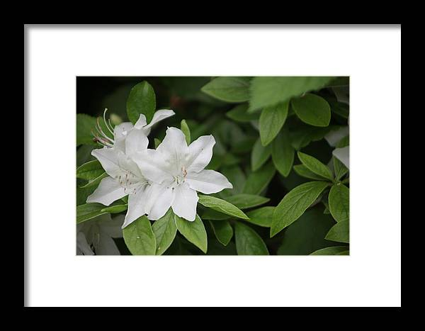 Landscape Framed Print featuring the photograph New Life by Dervent Wiltshire