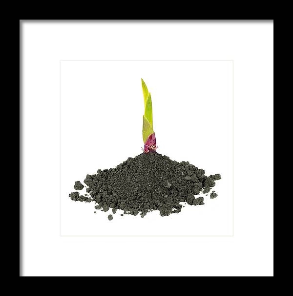 Agriculture Framed Print featuring the photograph New Life by Ioan Panaite