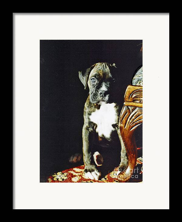 Boxer Dog Framed Print featuring the digital art New To The World by Judy Wood