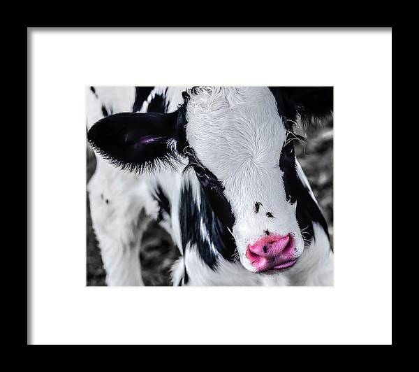 Agricultural Framed Print featuring the photograph Newborn by Brian Stevens