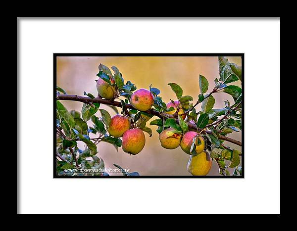 Nice Beatiful View Fall Apples Colors Sweden Summer Photography Framed Print featuring the photograph Nice Apples by Stefan Pettersson