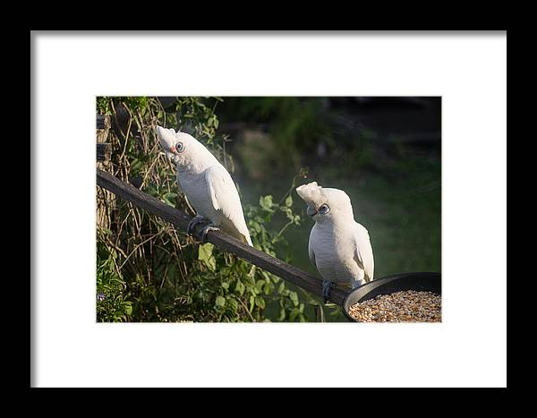 Birds Framed Print featuring the photograph Nice Day by Michael Podesta