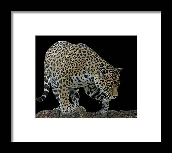 Jaguar Framed Print featuring the photograph Night Prowler 2 by Larry Linton