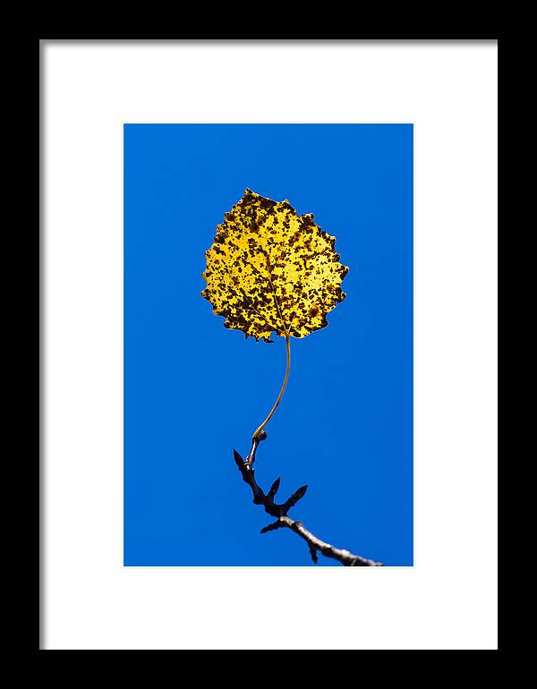 Abstract Framed Print featuring the photograph Nightlight by Alexander Senin