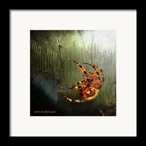 Spider Framed Print featuring the photograph Nightmares by Karen Slagle