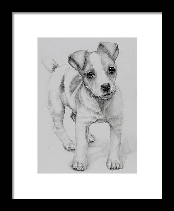 Jack Russell Framed Print featuring the drawing Nitro by Jean Cormier