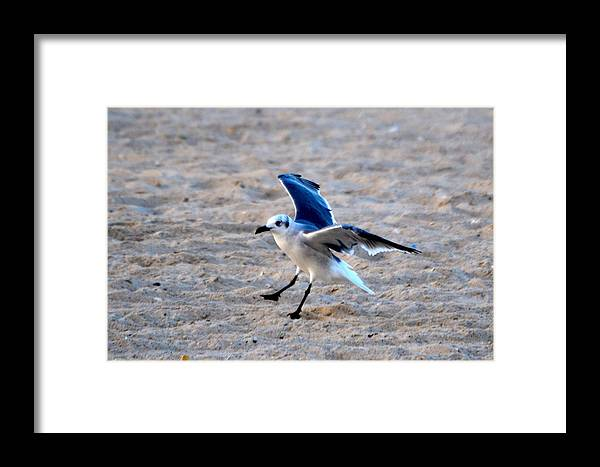 Seagull Framed Print featuring the photograph No Brakes by Tommy Pics