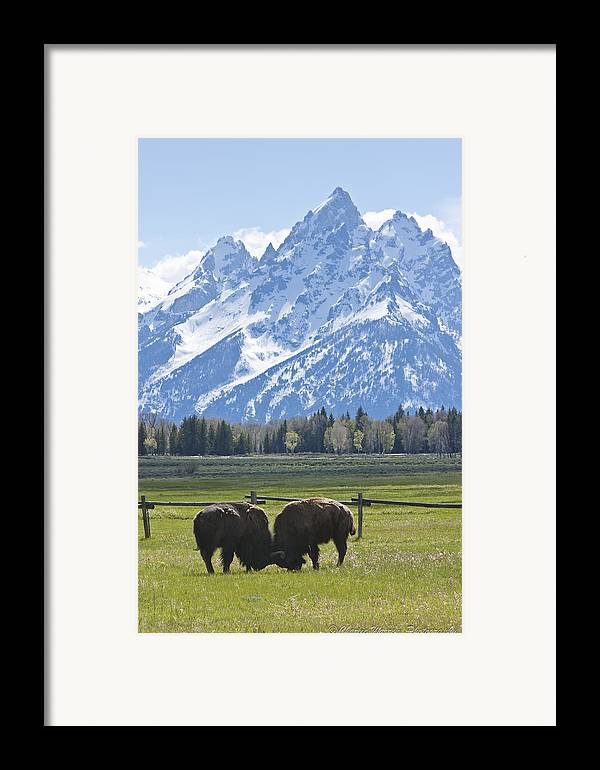 Grand Tetons Framed Print featuring the photograph No Butts About It by Charles Warren