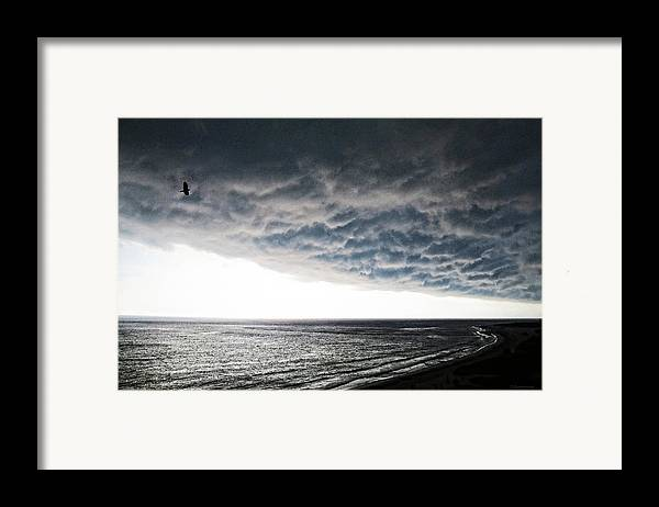 Bird Framed Print featuring the painting No Fear - Beach Art By Sharon Cummings by Sharon Cummings