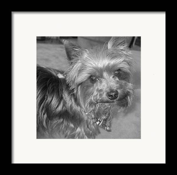 Dog Framed Print featuring the photograph No-nonsense Pup by Pharris Art